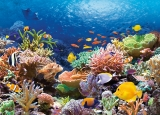 Castorland Puzzle CORAL REEF FISHES 1000 dielikov