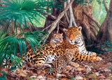 Castorland Puzzle JAGUARS IN THE JUNGLE 3000 dielikov